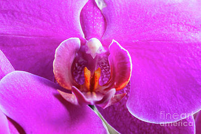 Royalty-Free and Rights-Managed Images - Detail of flowering orchid by Michal Boubin