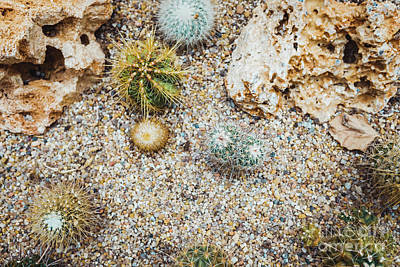 Owls - Detail of some cacti seen from above. by Joaquin Corbalan