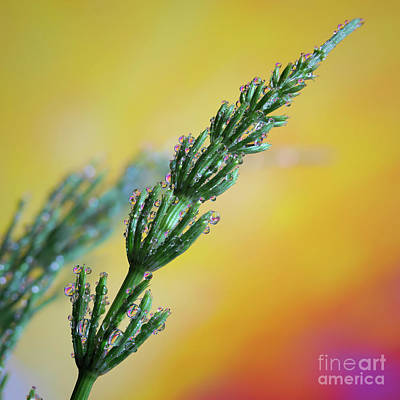 Royalty-Free and Rights-Managed Images - Dewdrops by Veikko Suikkanen