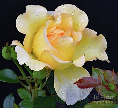 Airplane Paintings - Elegant Gold Struck Rose by Cindy Treger