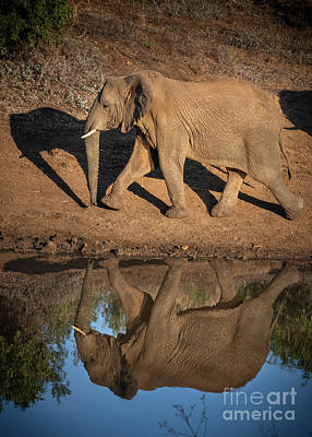 Animals Royalty-Free and Rights-Managed Images - Elephant Mirror by Jamie Pham