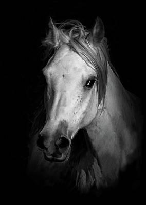 Sheep - Equestrian Shadows BW III by Athena Mckinzie