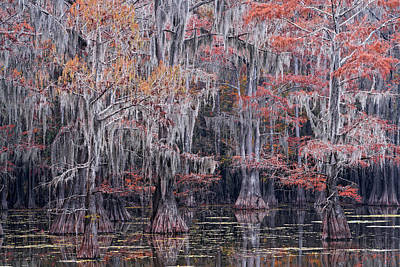 Abstract Animalia - Fall Bald Cypress by Jonathan Davison