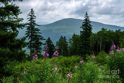 World War 2 Action Photography - Fireweed on the Mountain by Thomas R Fletcher