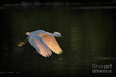 Modern Sophistication Beaches And Waves - Flight of the Egret by Priscilla Burgers