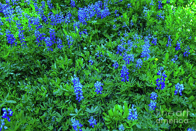 Royalty-Free and Rights-Managed Images - Flowers along the path by Jeff Swan
