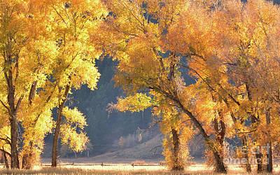 Spot Of Tea - Grand Teton in Autumn by Yinguo Huang