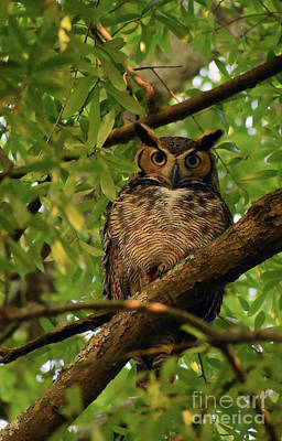 Reptiles - Great Horned Owl by Skip Willits