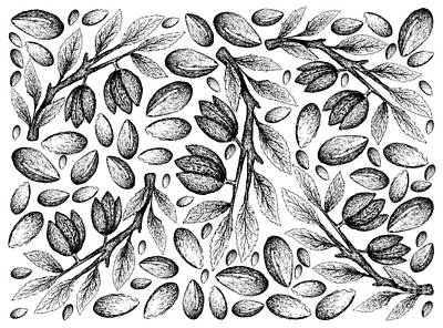 Drawings Royalty Free Images - Hand Drawn of Argan Seeds and Almonds Background Royalty-Free Image by Iam Nee