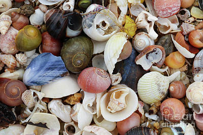 Keith Richards - Heap shells of molluscs on the beach at low tide by Michal Boubin