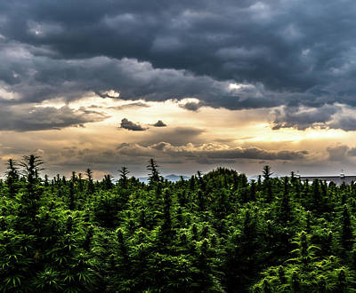 Landscapes Royalty-Free and Rights-Managed Images - Hemp Field Sunset 22 by Hemp Landscapes
