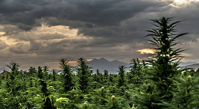 Landscapes Royalty-Free and Rights-Managed Images - Hemp Field Sunset 44 by Hemp Landscapes
