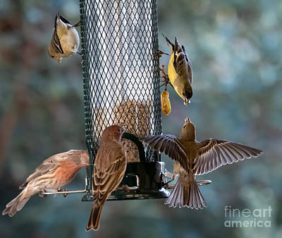 Animal Portraits - House Finch and Lesser Goldfinch by Bipul Haldar