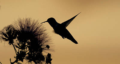 Celebrity Watercolors - Humming Bird silhouette by Gary Langley