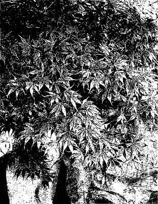 Still Life Drawings - Japanese Maple in Pot Black and White by Sharon Williams Eng