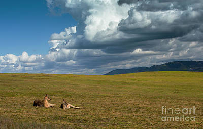 Trick Or Treat - Kangaroos and approaching storm by Sheila Smart Fine Art Photography