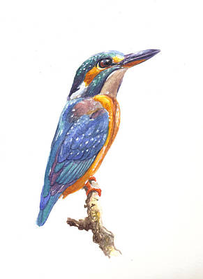 Royalty-Free and Rights-Managed Images - Kingfisher  by Arie Van der Wijst