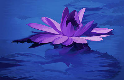 Abstract Graphics - Lavender Blue Water Lily by Rosalie Scanlon