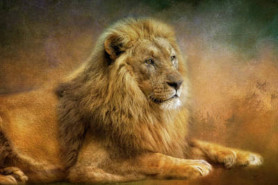 Animals Royalty-Free and Rights-Managed Images - Lion King by Claudia Moeckel