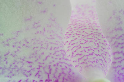 City Scenes - Macro of pink and white spotted orchid petals by David Ridley