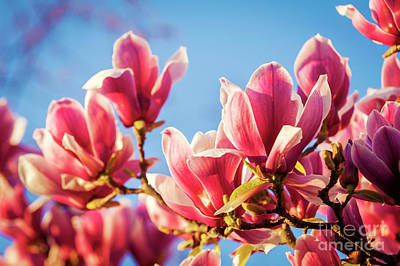 Royalty-Free and Rights-Managed Images - Magnolia by THP Creative