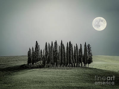 Royalty-Free and Rights-Managed Images - Moonlight Serenade by Evelina Kremsdorf