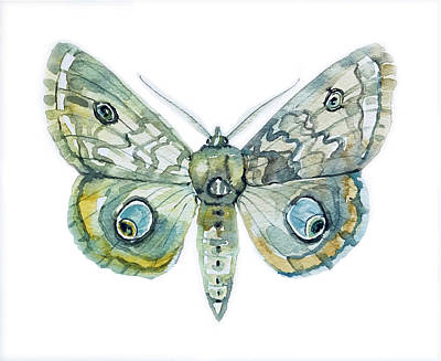 Railroad - Moth by Luisa Millicent