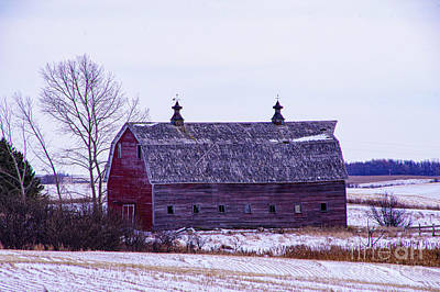 Tina Turner - Old barn in the winter by Jeff Swan