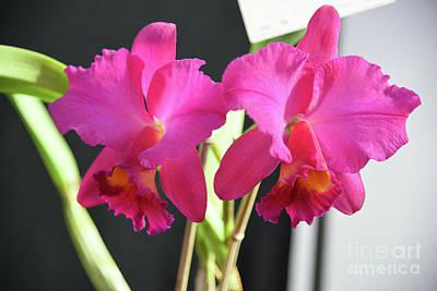 Kids Alphabet - Orchid #24 by Robert Tubesing