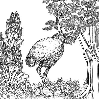 Animals Drawings - Ostrich by Jennifer Wheatley Wolf