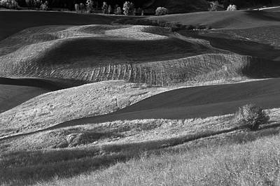 Black And White Horse Photography - Palouse Field 2 by Bob Neiman