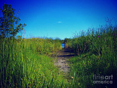 Frank J Casella Royalty-Free and Rights-Managed Images - Pathway to Prairie Lake by Frank J Casella