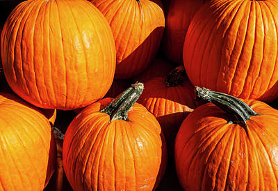 Rights Managed Images - Pumpkins and Sunlight Royalty-Free Image by Robert Ullmann