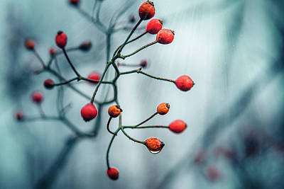 Photograph - Red Berries by Jessica Nelson
