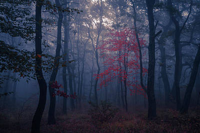 Everett Collection - Red Tree by Evgeni Dinev