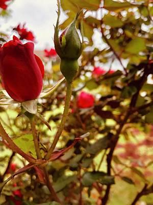 Easter Bunny - Rose by Linda Van Dyke