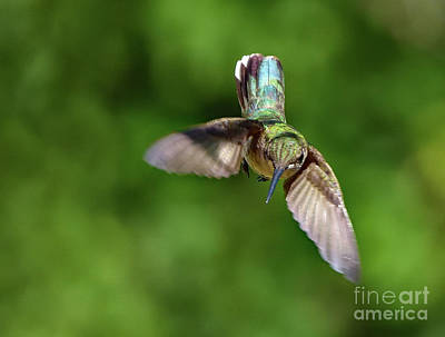 Fun Patterns - Ruby-throated Hummingbirds Iridescent Beauty by Cindy Treger