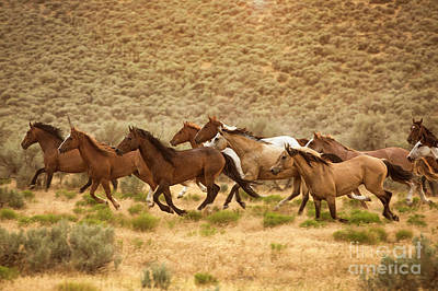 Achieving - Group of Running Horses by Diane Diederich