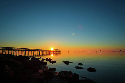 Amy Hamilton Animal Collage - Safety Harbor Pier Sunrise by Joe Leone
