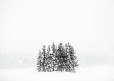 Photograph - Snowed In by Nick Borelli