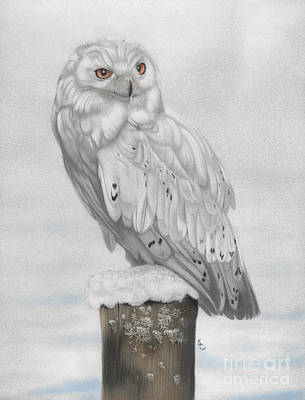 Karie-ann Cooper Royalty-Free and Rights-Managed Images - Snowy Owl by Karie-ann Cooper