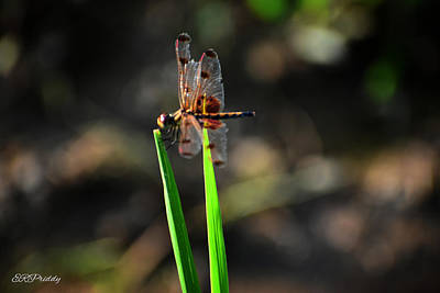 Kitchen Spices And Herbs - Spotted Dragonfly #6 by Erin Priddy