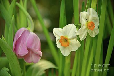 Animal Paintings David Stribbling - Spring Flowers by Robert Tubesing
