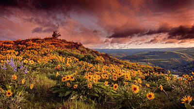 Hollywood Style - Rowena Crest Sunrise by Wes and Dotty Weber