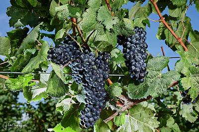Photograph - Tannat - Texas Hill Country by Miguel Lecuona