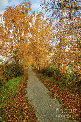Royalty-Free and Rights-Managed Images - The path of autumn by Veikko Suikkanen