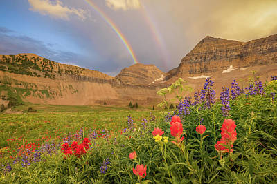 Royalty-Free and Rights-Managed Images - Timp Rainbow by Johnny Adolphson