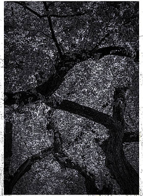 Mans Best Friend - Trees and Leaves - Black and White by Robert Ullmann