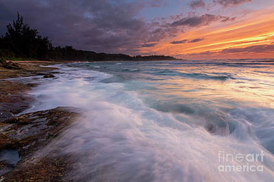 Abstract Animalia - Turtle Bay Sundown by Mike Dawson