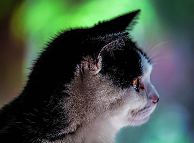Comedian Drawings Rights Managed Images - Tuxedo Cat Royalty-Free Image by Robert Ullmann